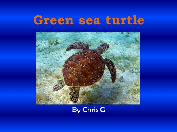 Green sea turtle<br />By Chris G <br />