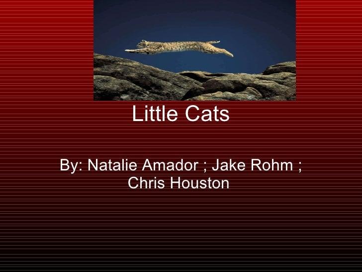 Little Cats By: Natalie Amador ; Jake Rohm ; Chris Houston