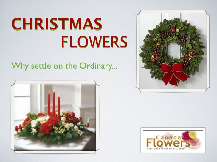 CHRISTMAS      FLOWERS Why settle on the Ordinary...