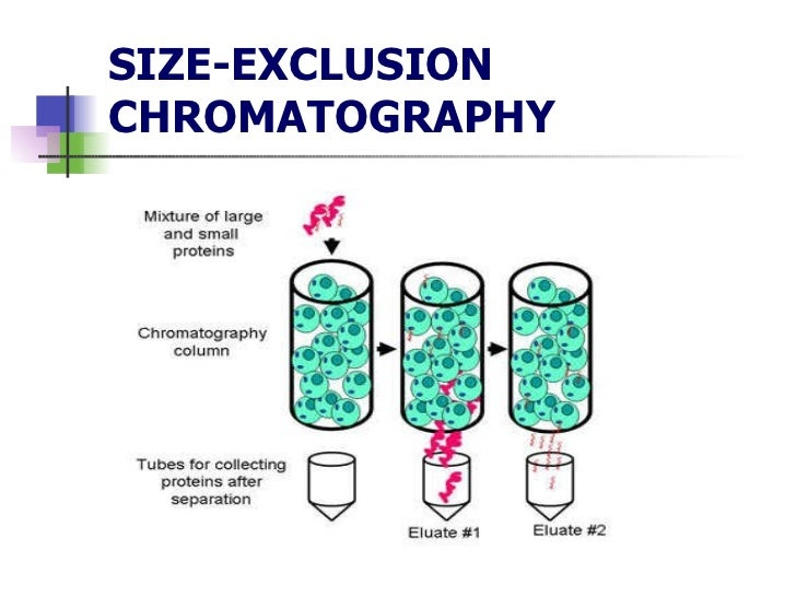 size elusion chromotography Size exclusion chromatography is used for semi-preparative purifications and various analytical assays it is a separation technique which takes the advantage of the difference in size and geometry of the molecules the molecules are separated based on their size grant henry lathe and colin r ruthven was the pioneer.