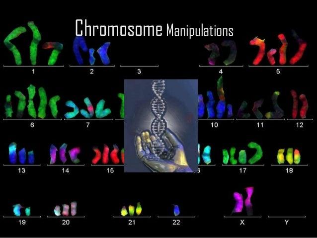 Chromosome manipulations