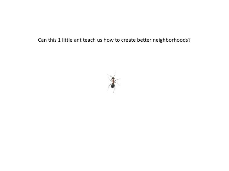 Can this 1 little ant teach us how to create better neighborhoods?<br />