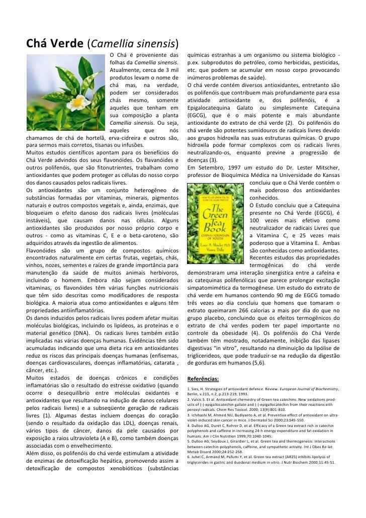 Chá Verde (camellia sinensis)