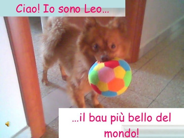 Ciao! Io sono Leo… … il bau più bello del mondo!