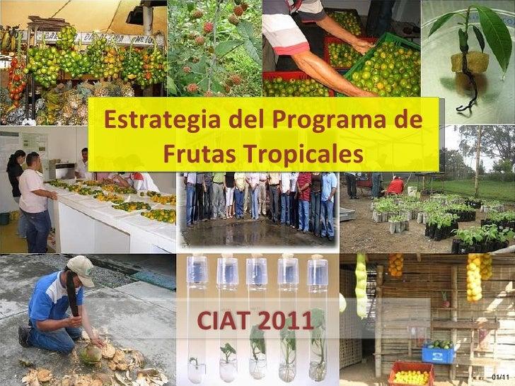 Estrategia del Programa de Frutas Tropicales 01/11 CIAT 2011