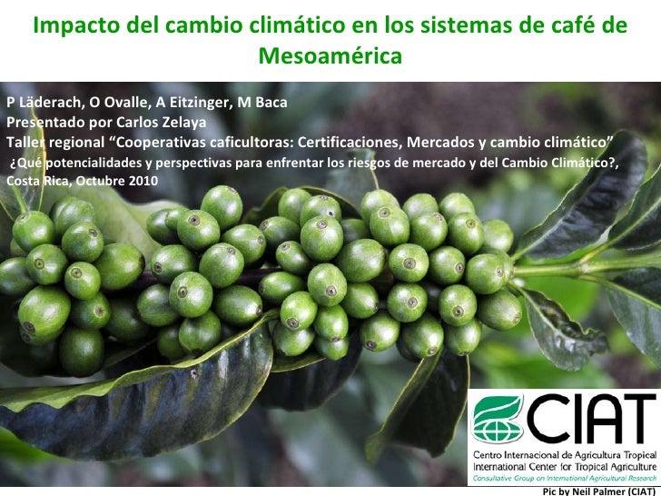 Impacto del cambio climático en los sistemas de café de Mesoamérica P Läderach, O Ovalle, A Eitzinger, M Baca Presentado p...