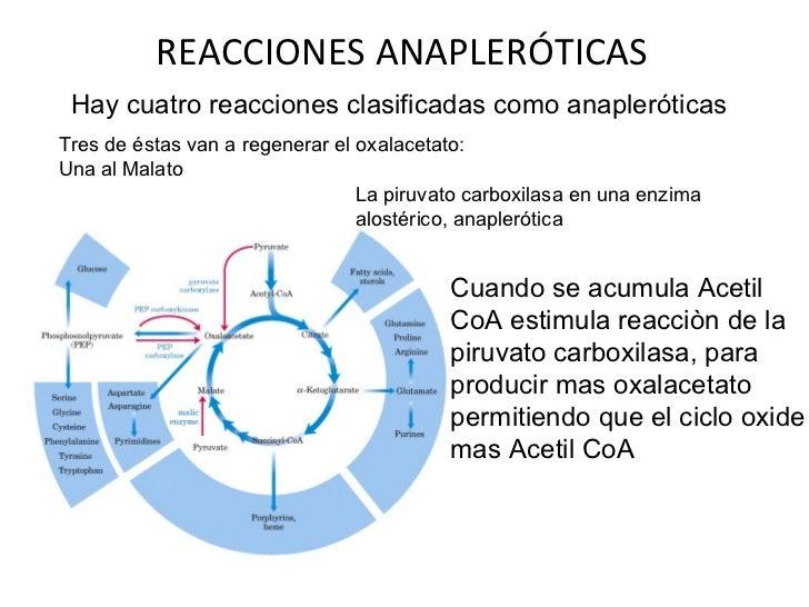 anabolicos antiestrogenicos