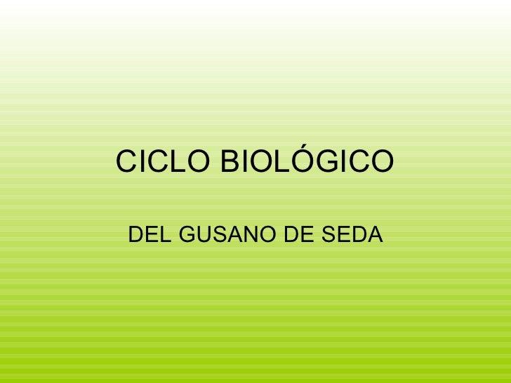 CICLO BIOLÓGICO DEL GUSANO DE SEDA