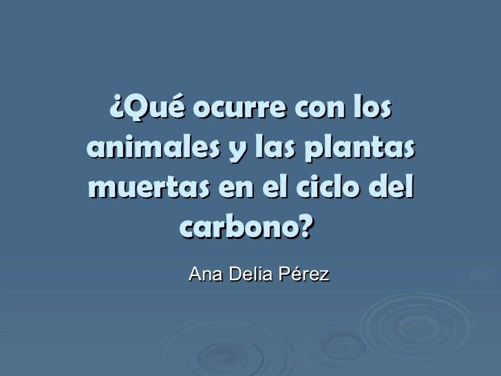 ¿Qué ocurre con los animales y las plantas muertas en el ciclo del carbono?   Ana Delia Pérez
