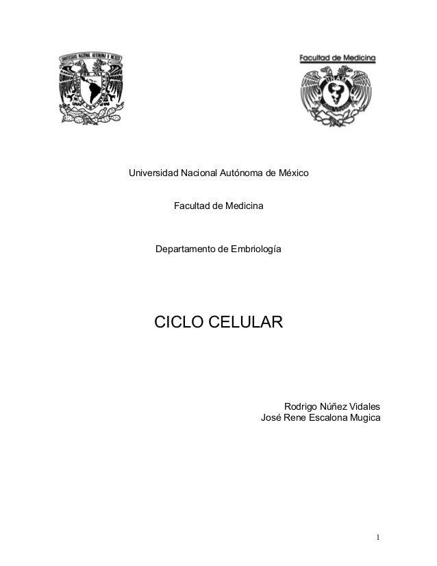 Universidad Nacional Autónoma de México  Facultad de Medicina  Departamento de Embriología  CICLO CELULAR  Rodrigo Núñez V...