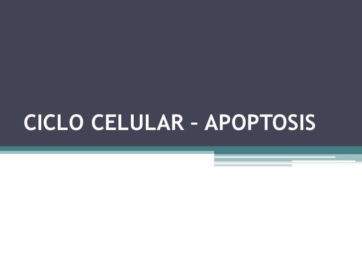 CICLO CELULAR – APOPTOSIS<br />