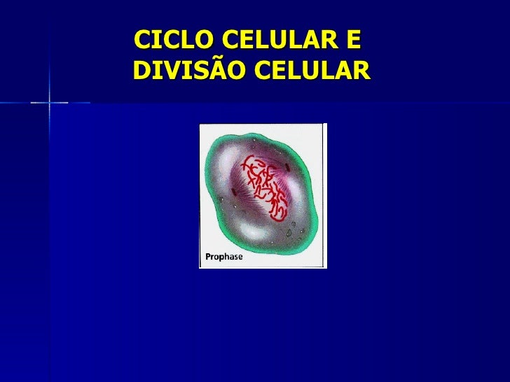 Ciclocelularmitoseemeiose[1]
