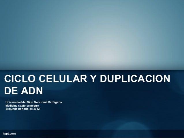 CICLO CELULAR Y DUPLICACIONDE ADNUniversidad del Sinú Seccional CartagenaMedicina sexto semestreSegundo periodo de 2012