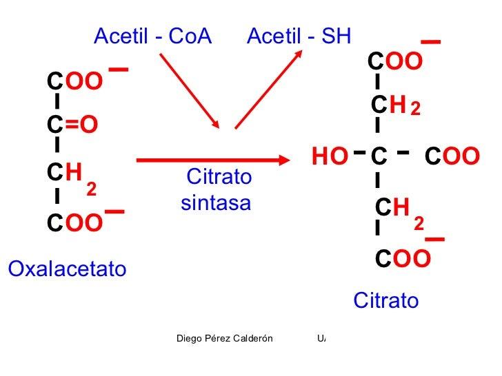 ciclo de krebs es anabolica o catabolica