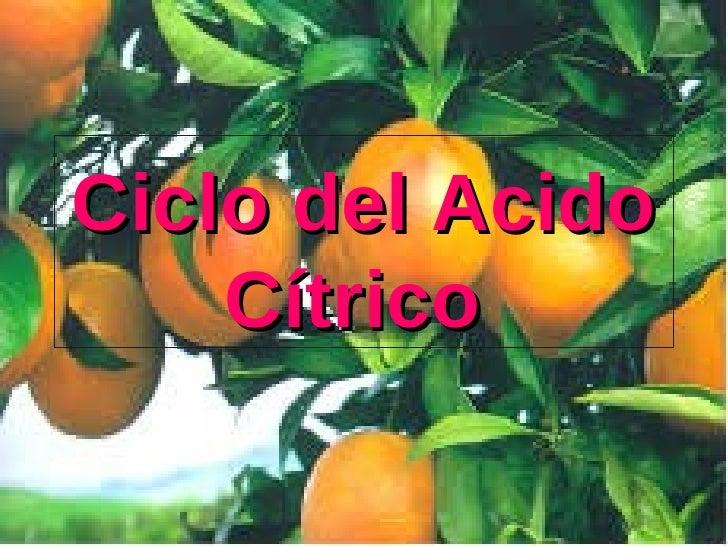Ciclo del Acido Cítrico