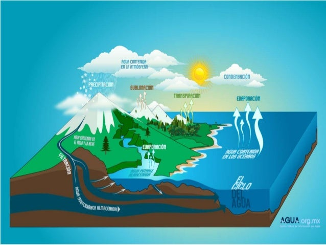 70% de la superficie terrestre está cubierta por los océanos Almacenan el 96,5% del agua del planeta El agua de los océ...