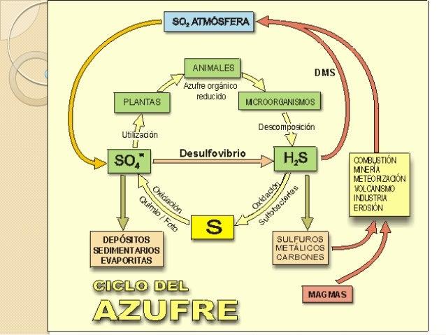 Ciclo sedimentario◦ En el ciclo sedimentario el azufre seencuentra en depósitos orgánicos einorgánicos, se libera por desg...