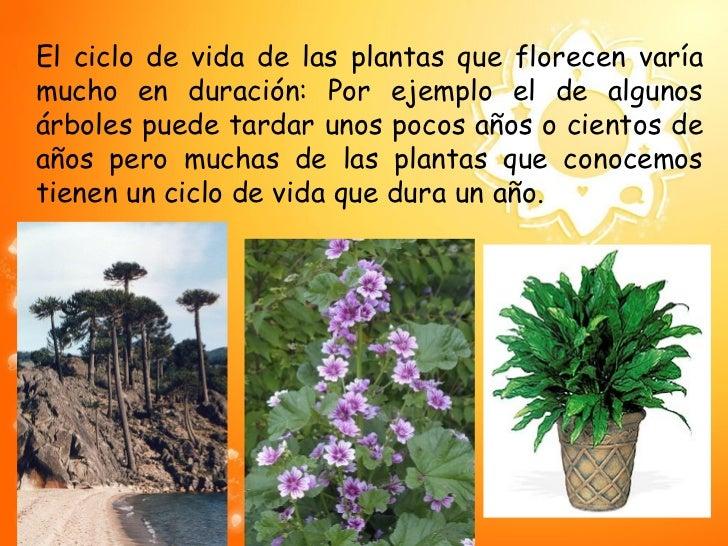 Ciclo de vida de las plantas for Plantas que hay en un vivero