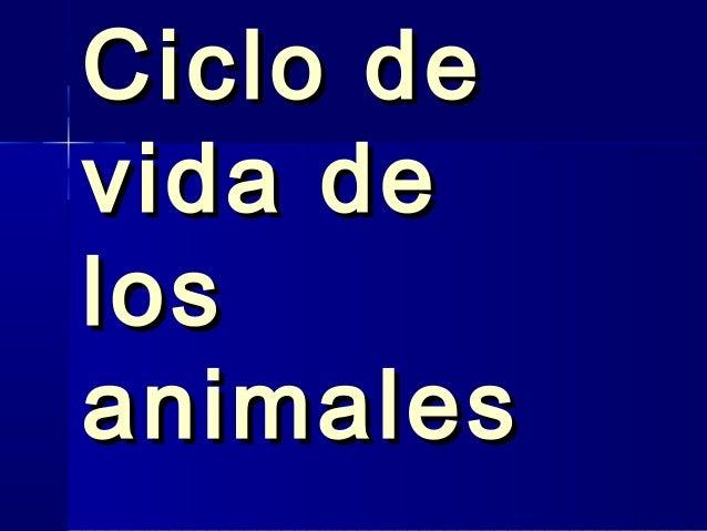 Ciclo De La Vida De Los Animales | apexwallpapers.com