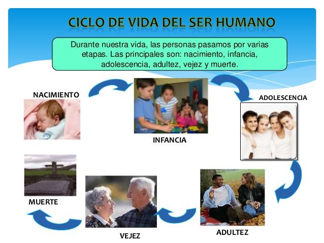 Ciclo de vida del ser humano - Imagui