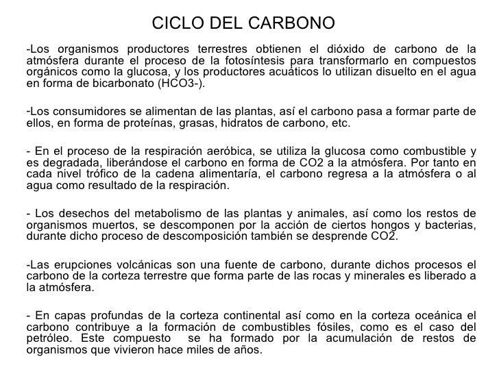 CICLO DEL CARBONO -Los organismos productores terrestres obtienen el dióxido de carbono de la atmósfera durante el proceso...