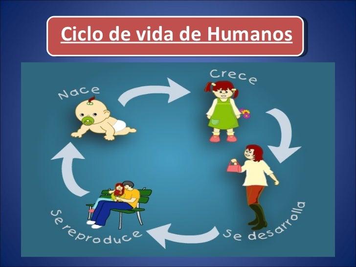 Ciclos de Vida Del Ser Humano Ciclo de Vida de Humanos