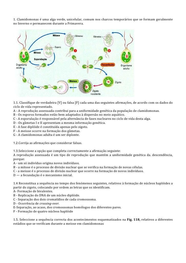 1. Clamidomonas é uma alga verde, unicelular, comum nos charcos temporários que se formam geralmenteno Inverno e permanece...