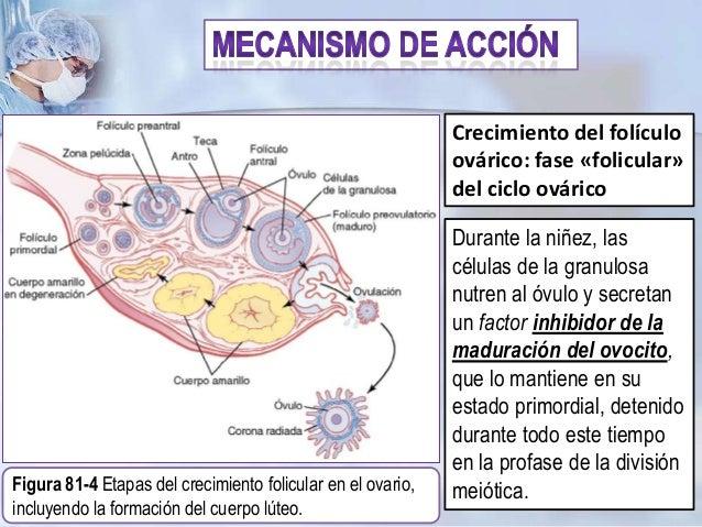 hormonas esteroideas caracteristicas