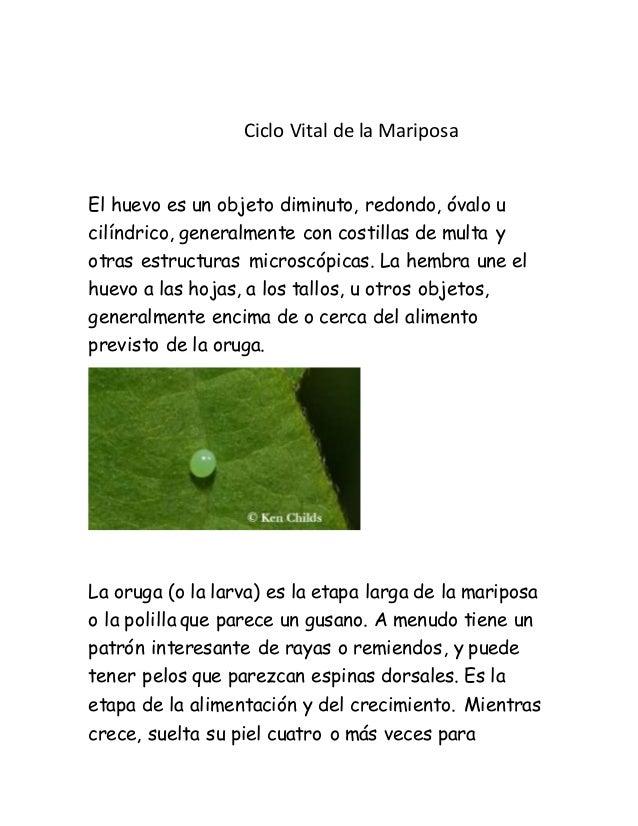Ciclo Vital de la Mariposa El huevo es un objeto diminuto, redondo, óvalo u cilíndrico, generalmente con costillas de mult...