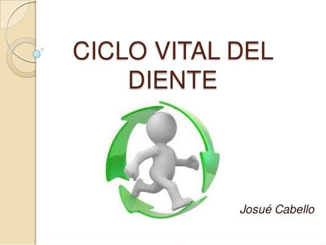 CICLO VITAL DEL DIENTE Josué Cabello