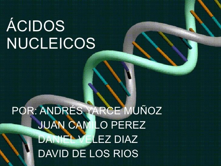 ÁCIDOS NUCLEICOS POR: ANDRÉS YARCE MUÑOZ JUAN CAMILO PEREZ DANIEL VELEZ DIAZ  DAVID DE LOS RIOS
