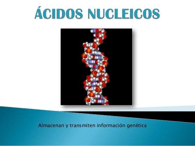 Almacenan y transmiten información genética