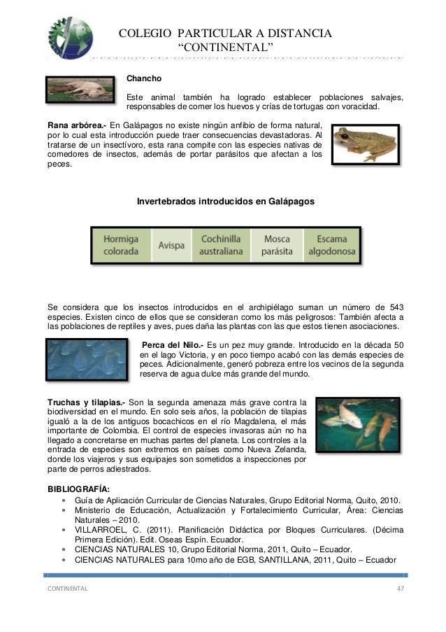 Informaci n ficus benjamina boj cuidados - Ficus elastica cuidados ...
