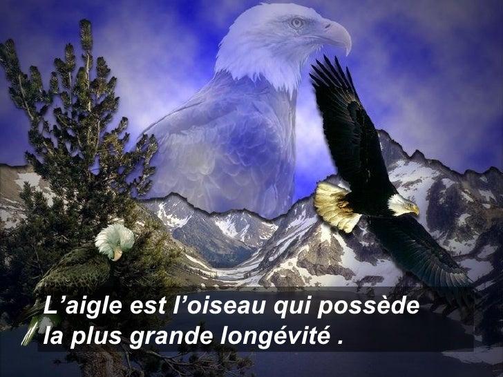 L'aigle est l'oiseau qui possède  la plus grande longévité .