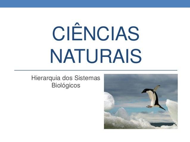 Ciências naturais   hierarquia dos sistemas biológicos