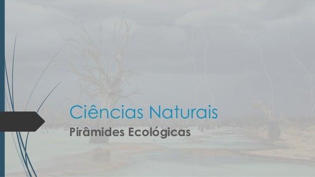 Ciências naturais   pirâmide ecológica