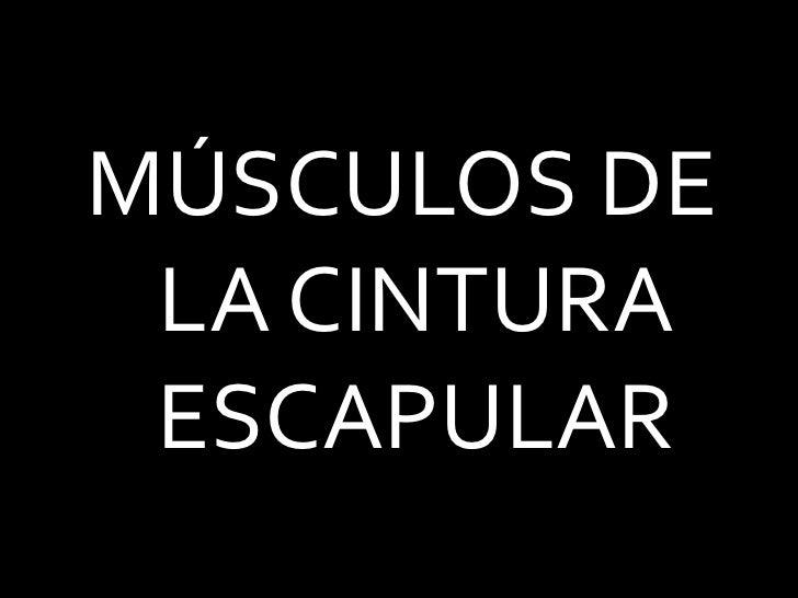 MÚSCULOS DE LA CINTURA ESCAPULAR<br />