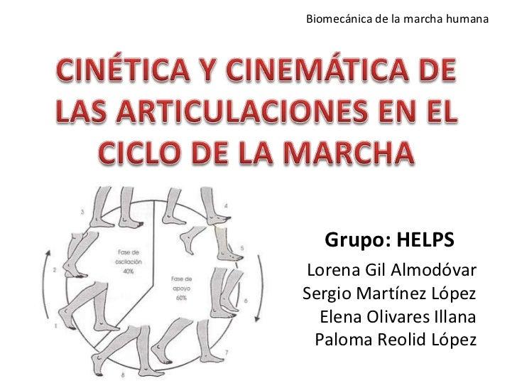 Biomecánica de la marcha humana   Grupo: HELPSLorena Gil AlmodóvarSergio Martínez López  Elena Olivares Illana Paloma Reol...