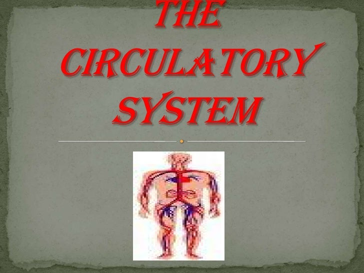 Introduction to the circulatory system<br />