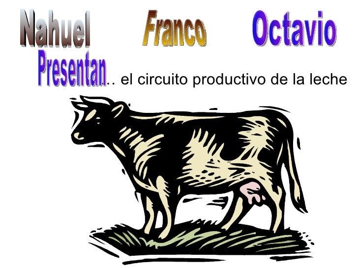 Circuito Productivo De La Leche : Circuito la leche