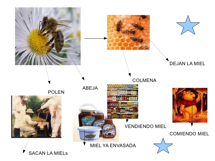 Circuito Productivo Del Vino : Circuito productivo de la miel