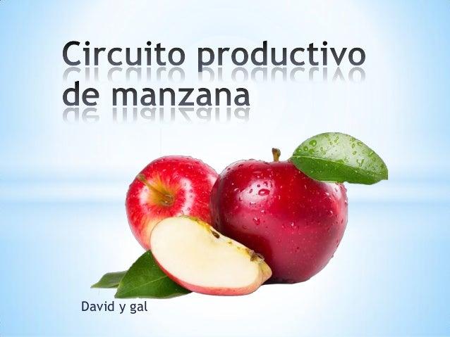 Circuito Productivo : Circuito productivo de las manzanas david y gal
