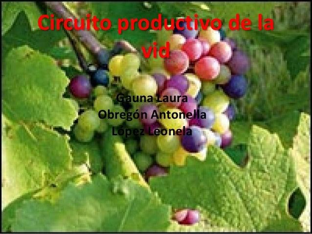 Circuito Productivo Del Vino : Circuito productivo de la vid