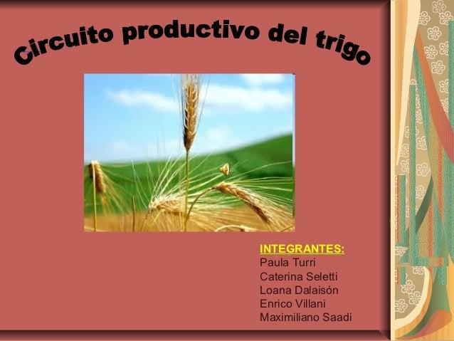 Circuito Productivo Del Vino : Circuito productivo del trigo
