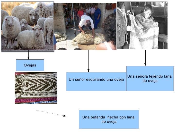 Circuito Productivo De La Lana : Circuito productivo lana