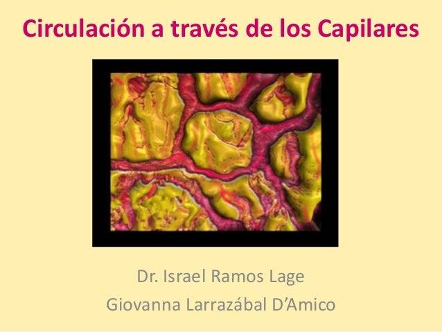 Circulación a través de los capilares