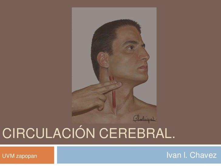 Circulación cerebral.<br />Ivan l. Chavez<br />UVM zapopan<br />