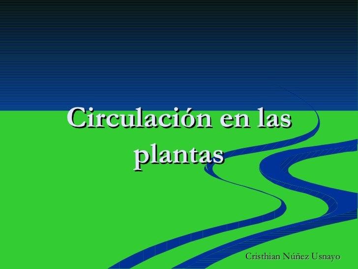 Circulación en las plantas Cristhian Núñez Usnayo