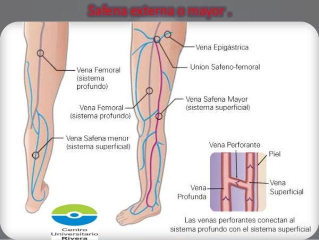 Los ejercicios para los pies y las nalgas a varikoze