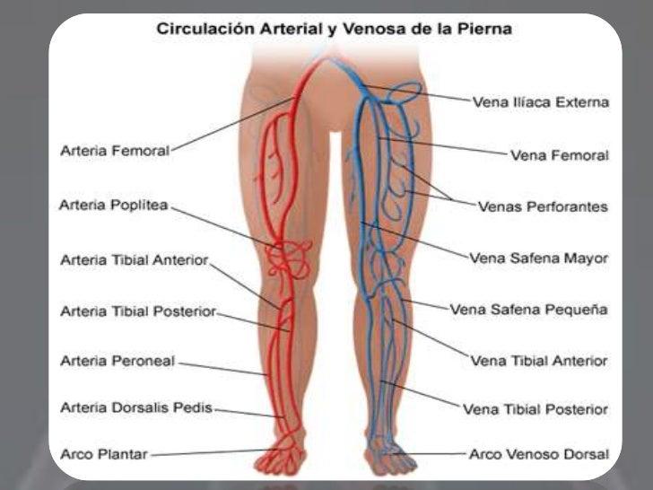 Perfecto Anatomía Notas De Las Extremidades Superiores Foto ...